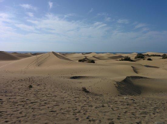 Club Torso Gay Resort: Dunes