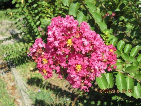 Tivat Municipality, Montenegro: Цветы на Острове цветов