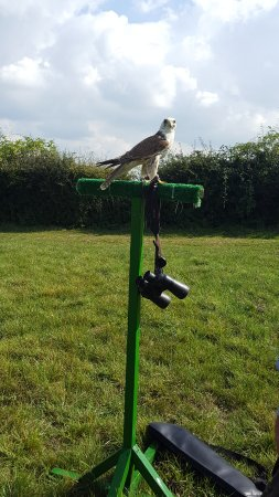 Countrywide Falconry
