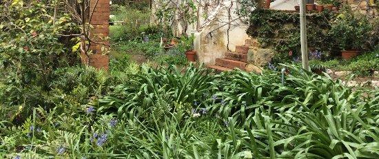 Hahndorf, ออสเตรเลีย: Garden