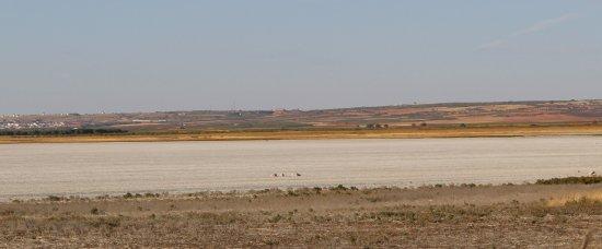 Mota del Cuervo, España: lagunas secas en septiembre