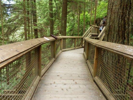 North Vancouver, Canadá: Boardwalk at Capilano Suspension Bridge