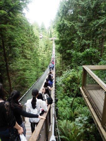 نورث فانكوفر, كندا: Capilano Suspension Bridge