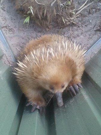 ริชมอนด์, ออสเตรเลีย: Zoodoo Wildlife Park