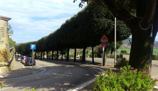 Camerano, Italia: il viale alberato