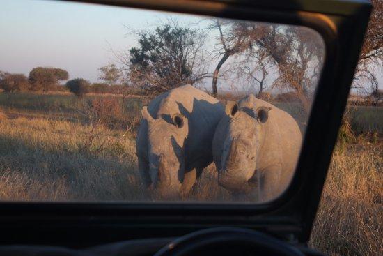 Mabula Private Game Reserve, Sudáfrica: safari pics