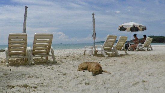 Provincia di Rayong, Thailandia: 白いビーチに犬ものんびり