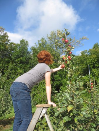 Kemptville, Canada: Have to get just that particular apple!