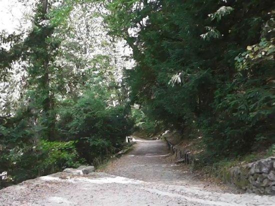 Plan-d'Aups-Sainte-Baume, Francia: Chemin des Roys