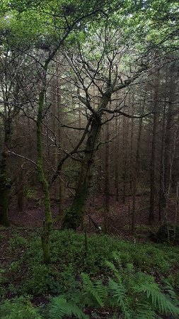 Glendalough Monastic Settlement : The woods were so beautiful and peaceful. I loved being enveloped by the trees as I hiked onward