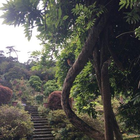 Bantry House & Garden: photo0.jpg