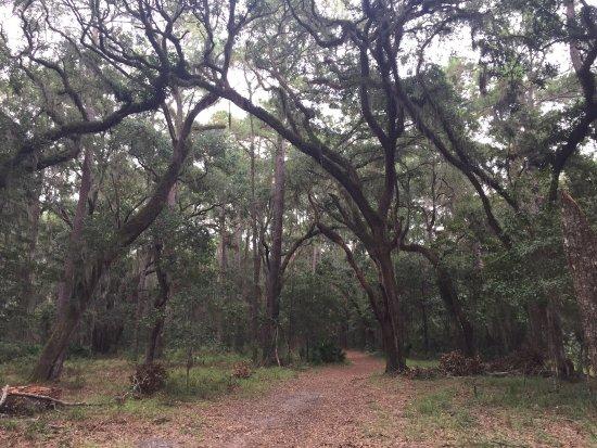 Sea Pines Forest Preserve: photo0.jpg