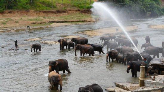 Pinnawala, Sri Lanka: bain