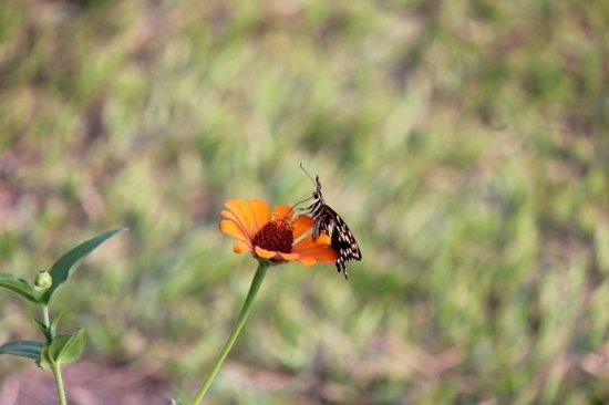 Fiori E Farfalle.Fiori E Farfalle Picture Of Fort Murchison Murchison Falls