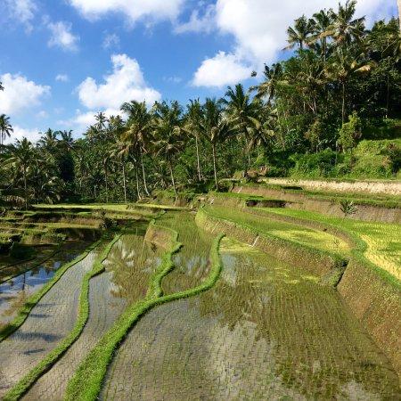 Τεγκαλάλανγκ, Ινδονησία: Gunung Kawi Sebatu Temple