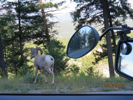 Foto Kootenay National Park