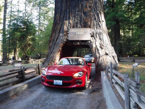 Old tree new car picture of chandelier drive through tree chandelier drive through tree old tree new car mozeypictures Image collections