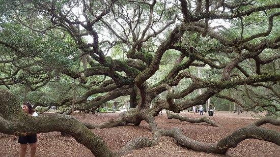 Angel Oak Tree: 20160921_123214_large.jpg