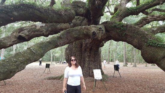 Angel Oak Tree: 20160921_122955_large.jpg