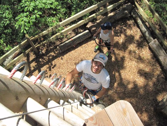 Cape May Court House, Νιού Τζέρσεϊ: Climbing up to the treetops
