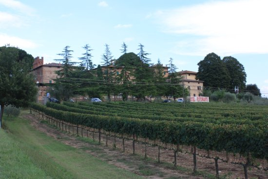 Monteroni d'Arbia, Italia: View from the vineyard towards the hotel. The grapes that are grown here are in the house wine.