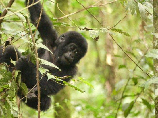 Bwindi Lodge: photo8.jpg