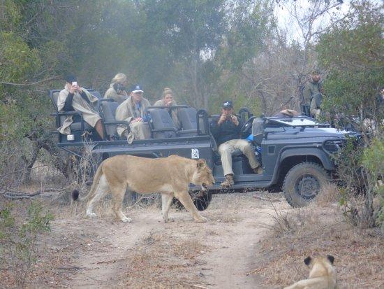 Timbavati Private Nature Reserve, Νότια Αφρική: Up close and personal