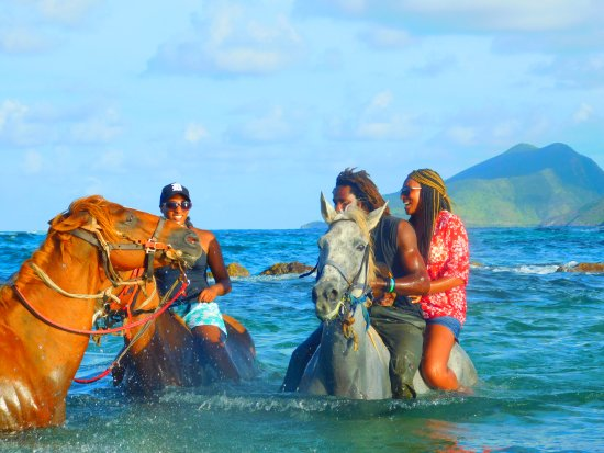 Frigate Bay, St. Kitts: Taking the horses in the sea