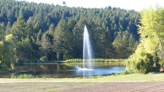 Butchart Gardens: The magnificent fountain at the back of the gardens.