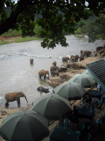 Pinnawala, Sri Lanka: наблюдение за слонами