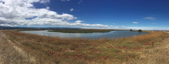 Palo Alto Baylands Nature Preserve: Palo Alto Baylands Hiking Trail