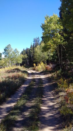 Nederland, CO: Nice trail