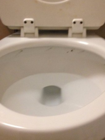 Holtsville, NY: Toilet not clean
