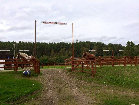 Carrbridge Pony Trekking