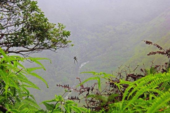 "Waihee, Havaí: The only ""Wildlife"" we saw."