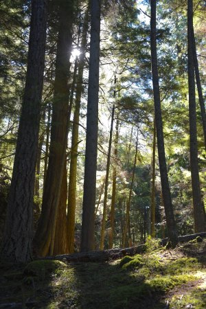 Moran State Park: photo1.jpg