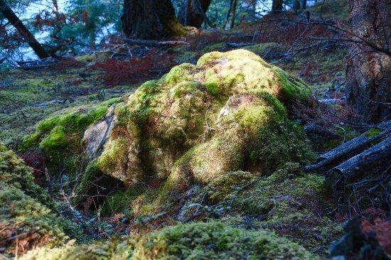 Moran State Park: photo2.jpg