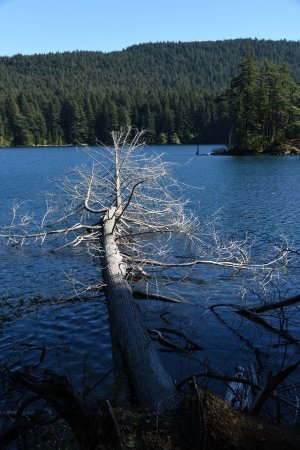 Moran State Park: photo7.jpg