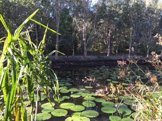 Suffolk Park, Αυστραλία: photo2.jpg