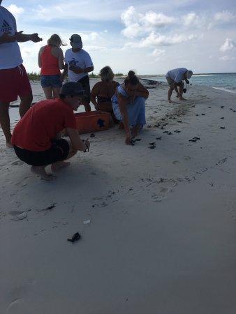 Sea Turtle Hatchery : photo9.jpg