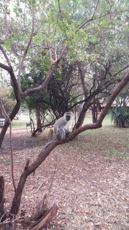 Voyager Ziwani, Tsavo West: 20160909_070607_large.jpg