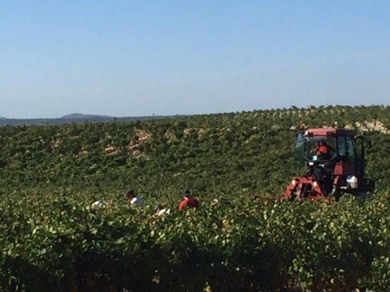 Le Gout des Autres - Wine Prestige Tour: Harvest Time in Chateauneuf-du-Pape