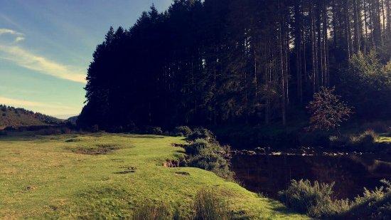 Postbridge, UK: Bellever Forest
