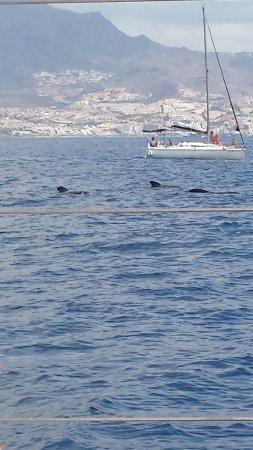 Freebird Catamarans: Dolphins