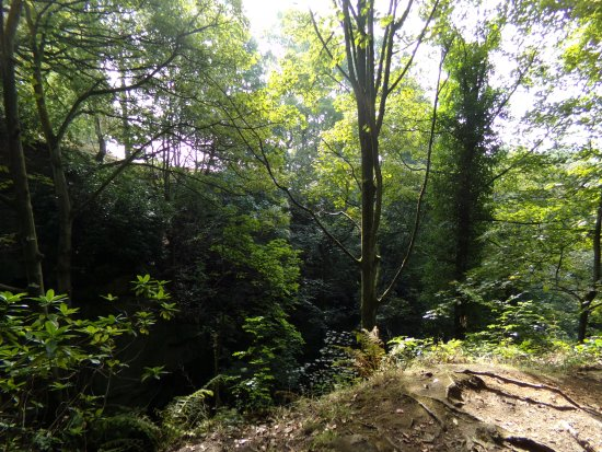 Matlock, UK: quiet wooded area at lumsdale valley