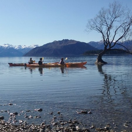 """Getting up close & personal with """"That Wanaka Tree"""" then a paddle off to Ruby Island."""
