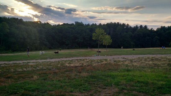 Malden, MA: Dog park!