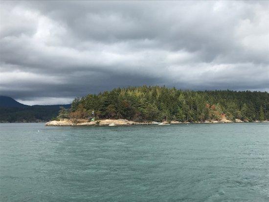 Anacortes, Вашингтон: Yogi the humpback came right up to the boat!