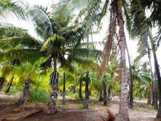 Kaunakakai, Hawái: More trees