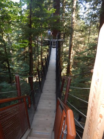 Норт-Ванкувер, Канада: The tree walk